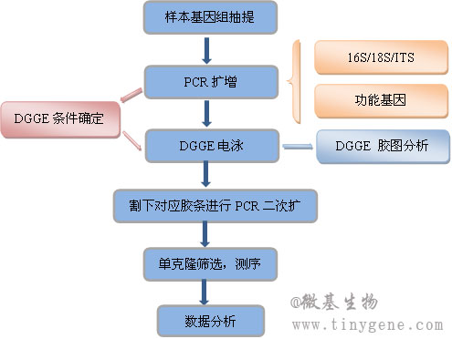 PCR-DGGE