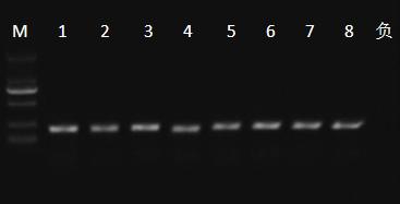 PCR detection