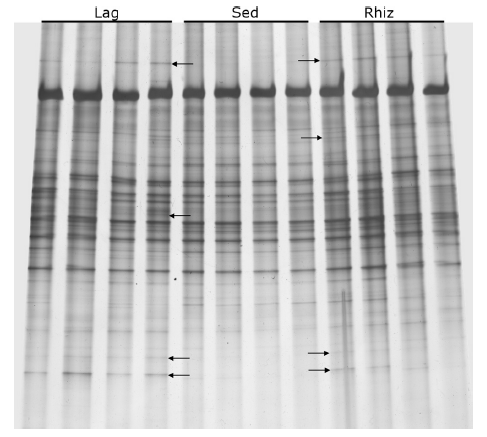 rhizosphere-microbiome02