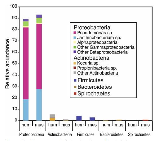 skin microbiome 06