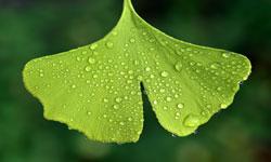 代谢组-植物激素
