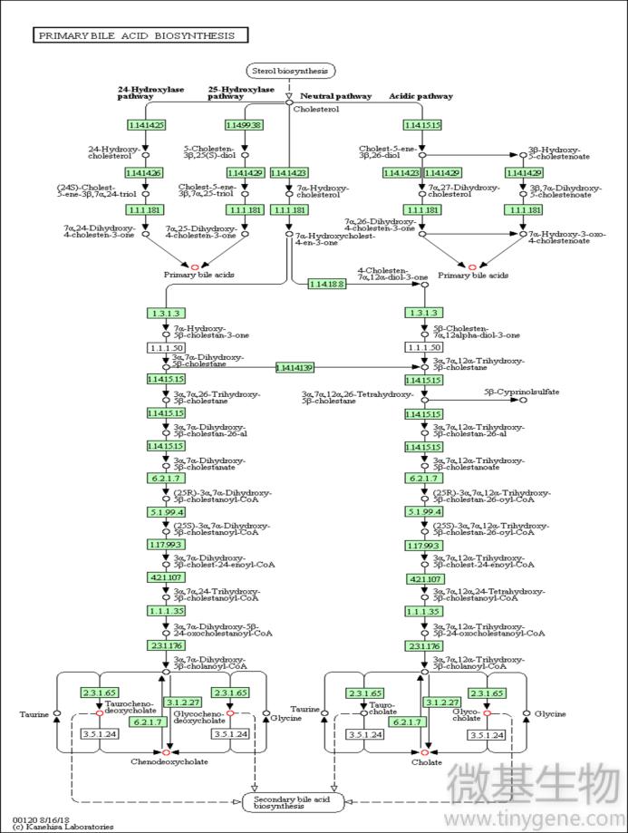 图3下,代谢通路,KEGG代谢途径,分析