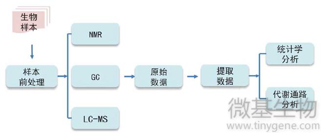 方法流程,代谢组,检测方法,流程