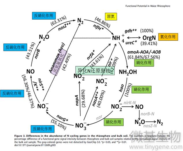 1 氮循环图