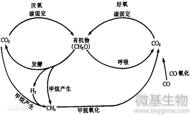 3 碳循环图