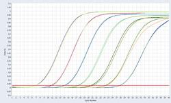 qPCR-ddPCR--特定功能基因检测